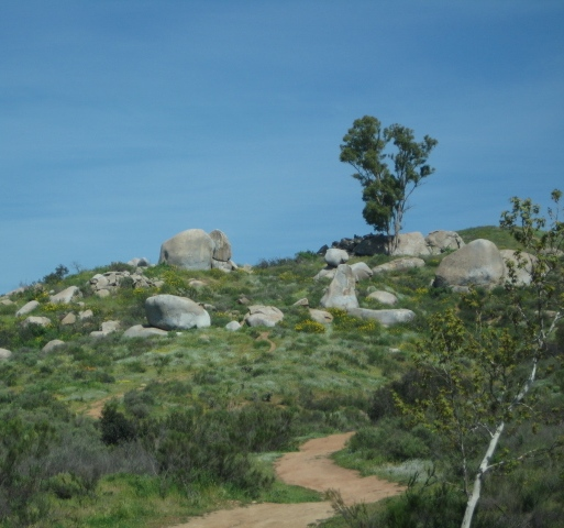 Climbing Environment
